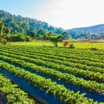 Distribuidor de espessante agrícola
