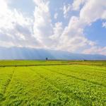 Espessante agrícola